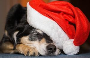 Vánoce v Anglii, Francii a na Ukrajině - jak slaví a co dodržují