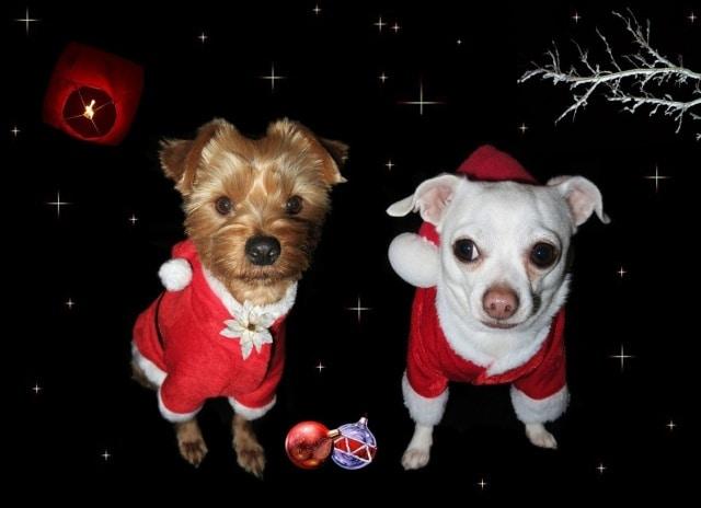 Obrázkové vánoční přání s vtipnými psíky