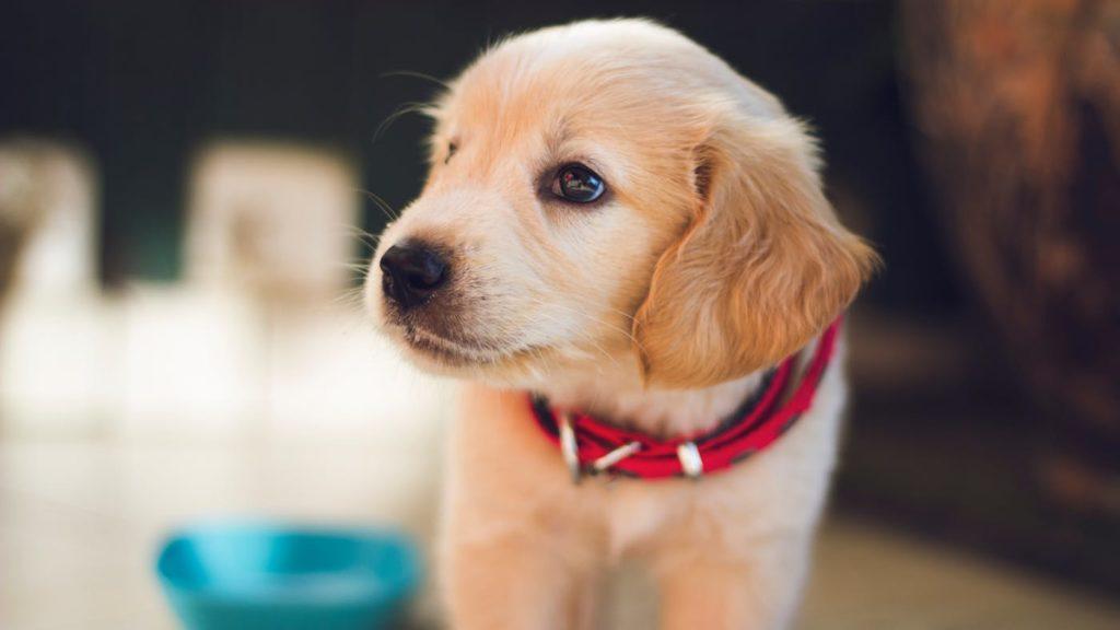 krásné štěnátko nemusí být vždy nejvhodnější dárek