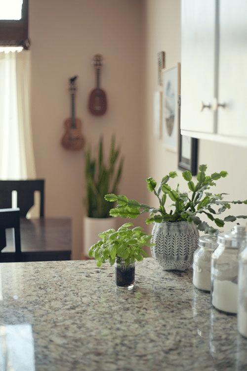 Rady kam umístit doma vánoční kaktus.