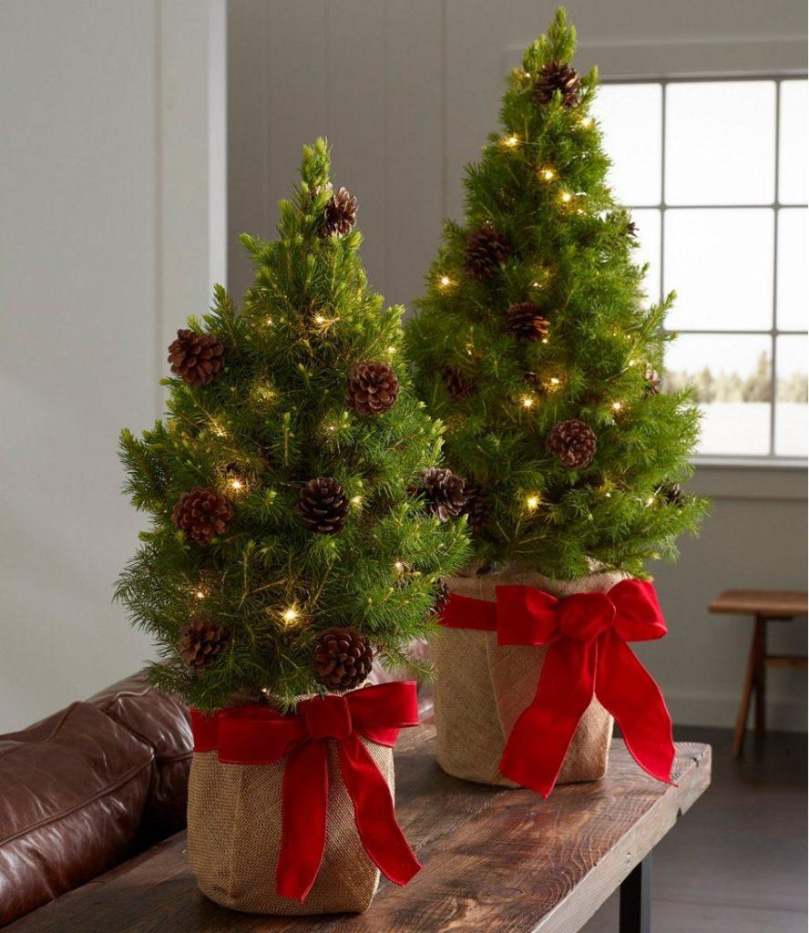 Stromečky můžete využívat v podstatě celoročně.